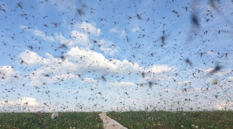 cloud-of-mosquitos-